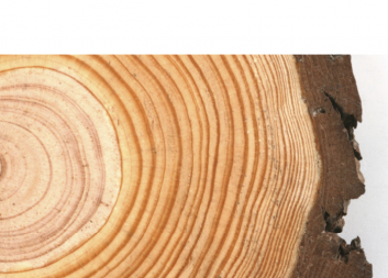 Programkonferens: Automation & innovation i digitaliseringen av skogsbruket