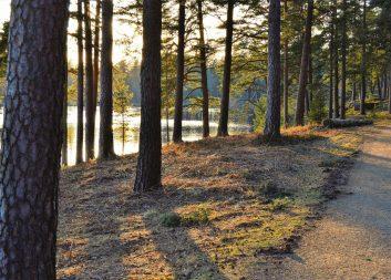 Ny rapport: Skogen räcker inte till allt