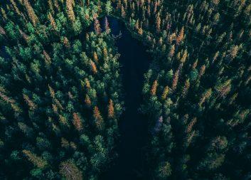 Utlysning: 19 miljoner kronor att ansöka om hos Skogssällskapet