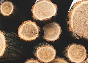 Längre stocklängder i svenskt skogsbruk