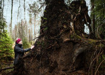 """""""Det går inte att kompromissa med skogens biologiska mångfald"""""""